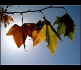 21.10.2004 ... Some portuguese autumn colors ...