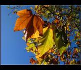 Autumn colors ... 2