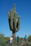 Big Saguaro