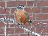 2004-12-18 Robin