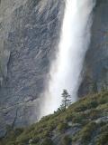 Lone Pine at Yosemite Falls