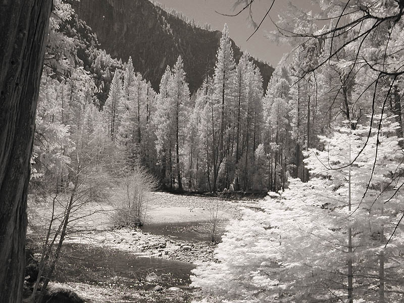 Trees (infrared)