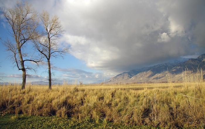 Landscape 137A.jpg