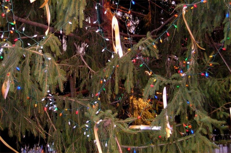 Bowling Green tree closeup