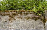 Muckross wall