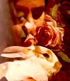 Rabbit rose