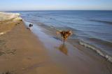 dogs snow sand.jpg