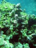 DiveOmanMar05 107.jpg