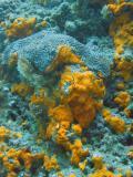 DiveOmanMar05 124.jpg