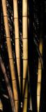 Bamboo In Wilderness Park - Prattville, Alabama