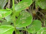Signature Leaves