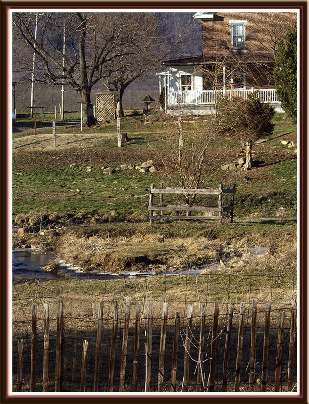 Tree Protection from Vicious Cows (farm, fence)