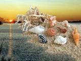 Beachcombings...    Shells, Corals, and More