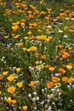 Apache Trail Wild Flowers  #1