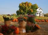 Autumn harvest 2003