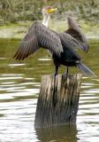 IMG_1763 birds.jpg
