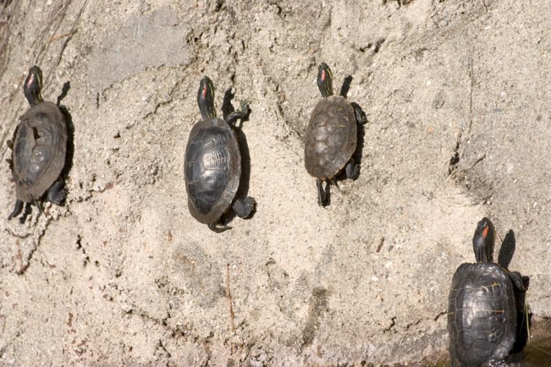 turtles on wall.jpg