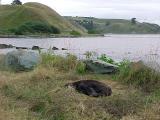 2c the seals in kaikoura.