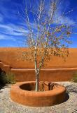 Tree in a Courtyard