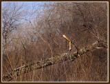 March 22 - The Alligator Tree