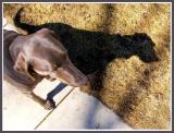 March 27 - My Neighbor, Molly