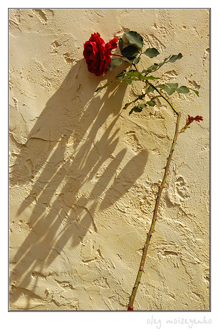 Shadows on The Name of the Rose