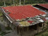 in thimphu town, the fall is chili drying time, then one has winter chilis too!just past 2nd traffic circle going down to bridge/dzong on right, thimphu