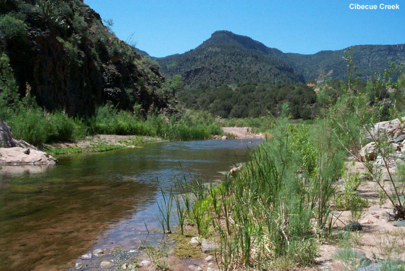 Cibecue Creek in the Salt River Canyon