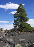 Lava Field, Sunset Crater National Monument