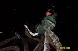 Lindsay in Tree 2