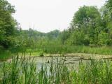 Greenwood Conservation Area, Ajax and Pickering, Ontario, Canada