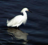 Photo Bird List