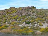 Anza Borrego Desert State Park - 2005