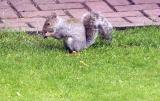 Squirrels in the garden  2003/2004
