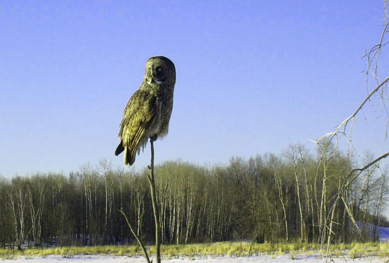 Owl on a stick