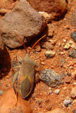 australian_birds_and_bugs_ect
