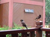 Birds at our chalet