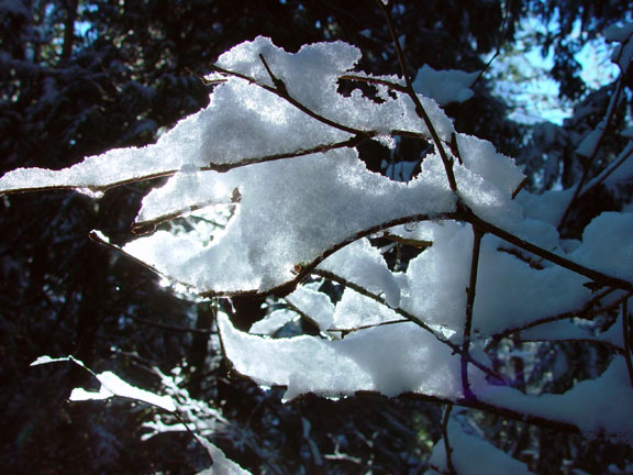 Backlit branch with snow