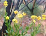 Flowers in the Northern Territory
