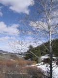 springtime scene from our deck P1010014.JPG