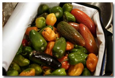 Fresh Picked Peppers