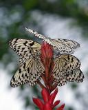 ftw_butterflies