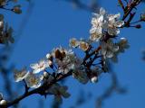 Signs of Spring.jpg