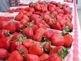 Starwberries! - CP990