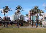 Downtown Long Beach from aquarium - CP 5000
