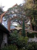 Glass Church - Palos Verdes