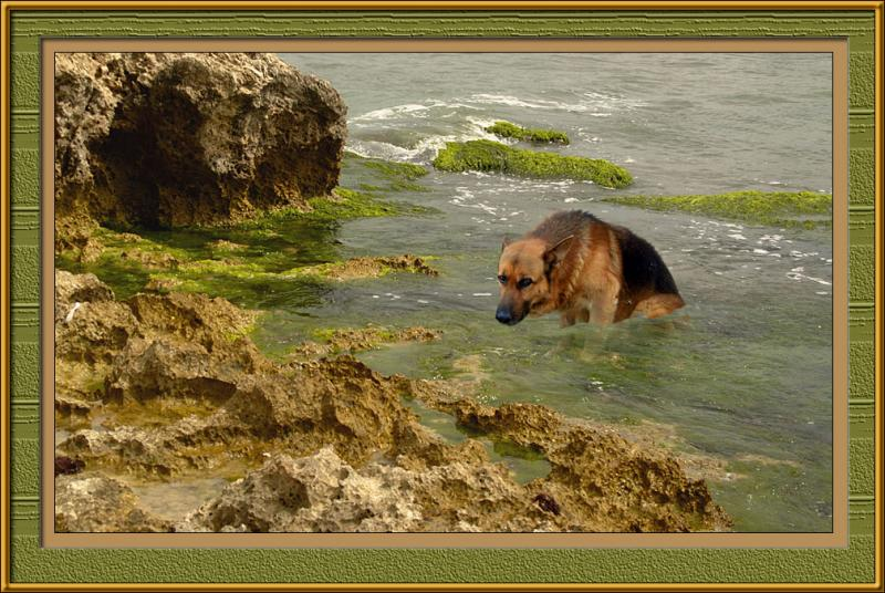 In memory of Luki, my old dog...