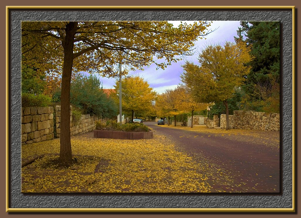 Fall in my village