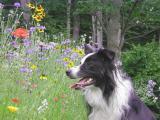 wildflowerdog2.JPG