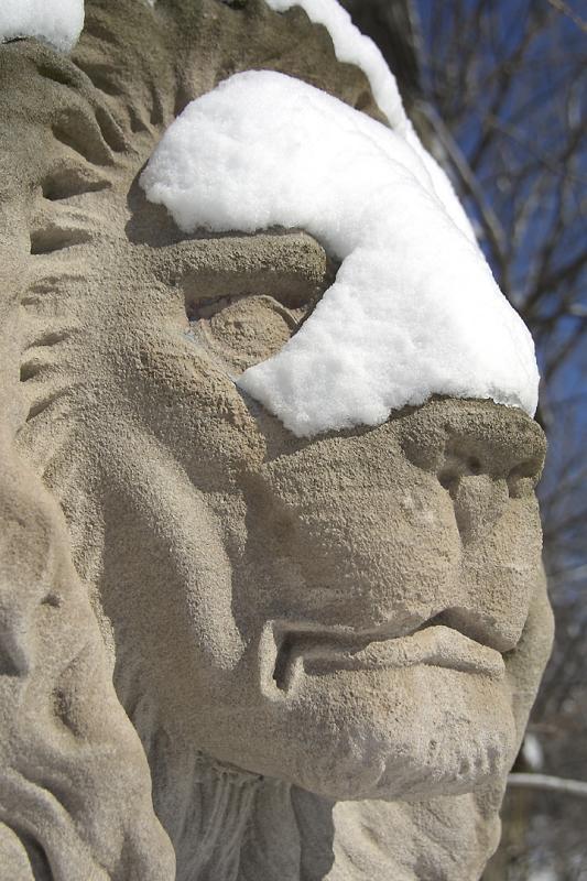 Lake Park Lion Snowy Profile